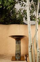 David Pearson: Desert Palm